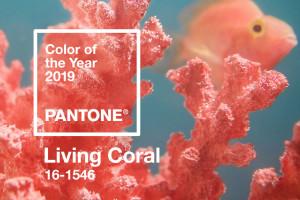 Living Coral - kolor roku 2019 Pantone. 10 inspiracji food'owych z Instagrama