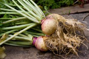 Zapomniane warzywa podbijają na nowo serca restauratorów