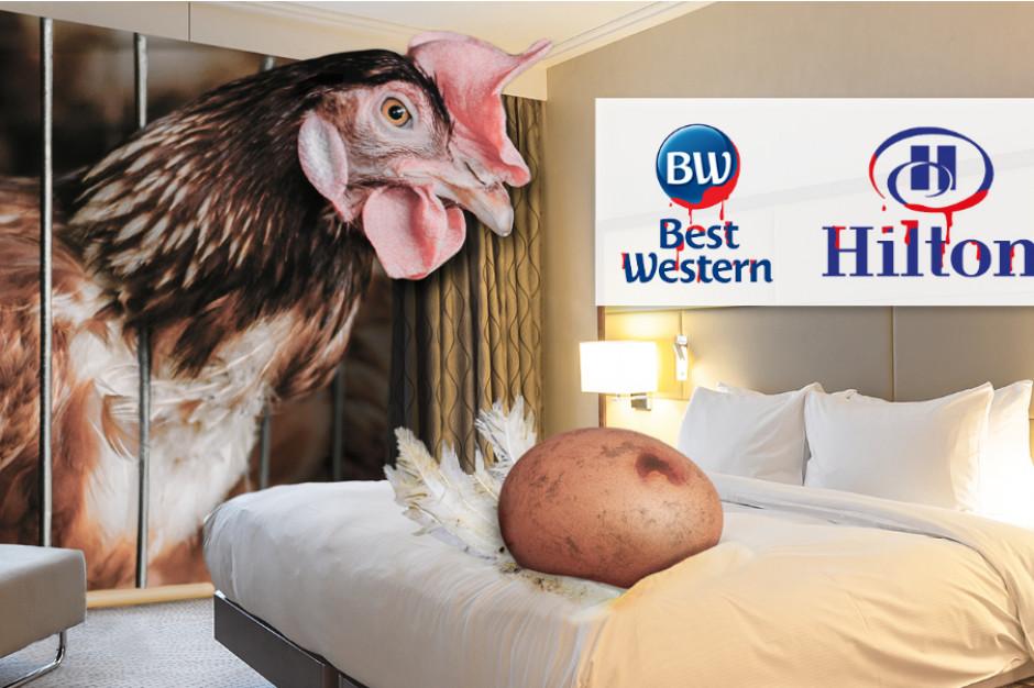 Fundacja Alberta Schweitzera wzywa sieci hoteli Hilton i Best Western do rezygnacji z jaj klatkowych