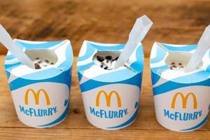 McDonald's wycofa plastikowe wieczka na lody McFlurry