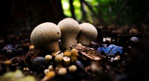 RAJ - łąki do wynajęcia zaprasza na grzyby