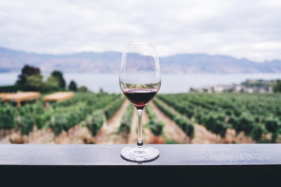 Enoturystyka bardziej opłacalna dla małopolskich winiarzy niż sprzedaż trunków do restauracji