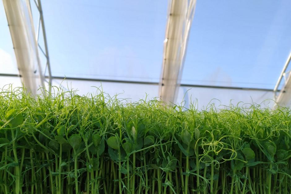 Fusion Gusto inwestuje w nową szklarnię do uprawy mikro ziół dla HoReCa
