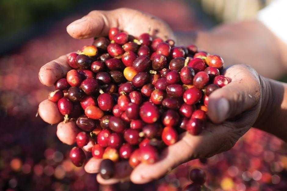 Starbucks: Kwestie środowiskowe wśród trendów na rynku kawowym