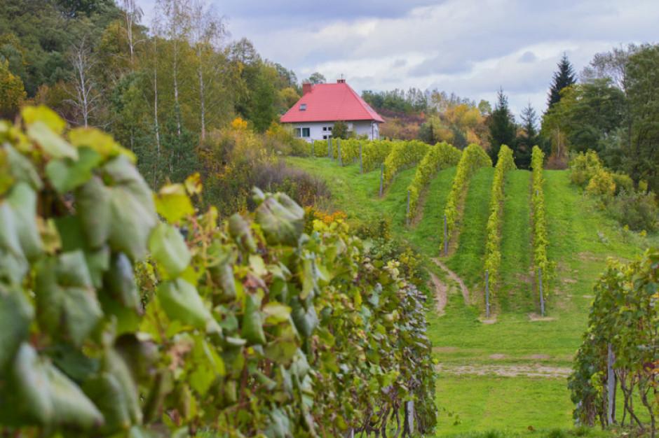 Turyści będą zwiedzać winnice w Małopolsce