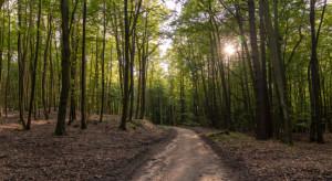 """Hotele """"Dobre z Lasu"""" - nowy pomysł Lasów Państwowych"""