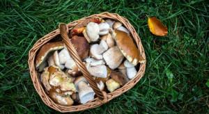 Grzyby w roli głównej - czyli sezonowość na talerzu